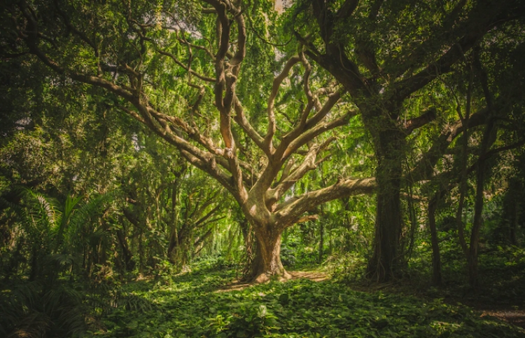 Los bosques que han vuelto a crecer en el mundo desde 2000 alcanzan para cubrir Francia